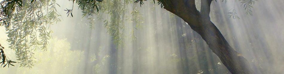 淡路島でのオリーヴ栽培をご支援下さい!
