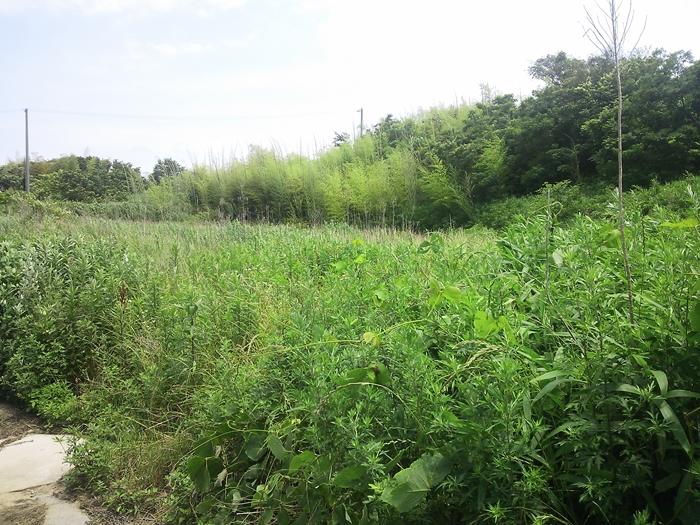 淡路島で遊休地を利用してオリーヴを栽培してみたい方へ
