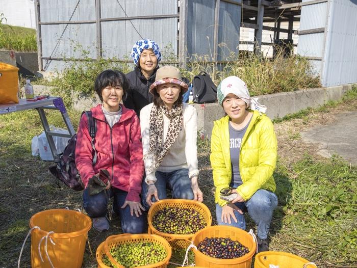 淡路島でオリーヴの収穫体験をしてみたい方へ